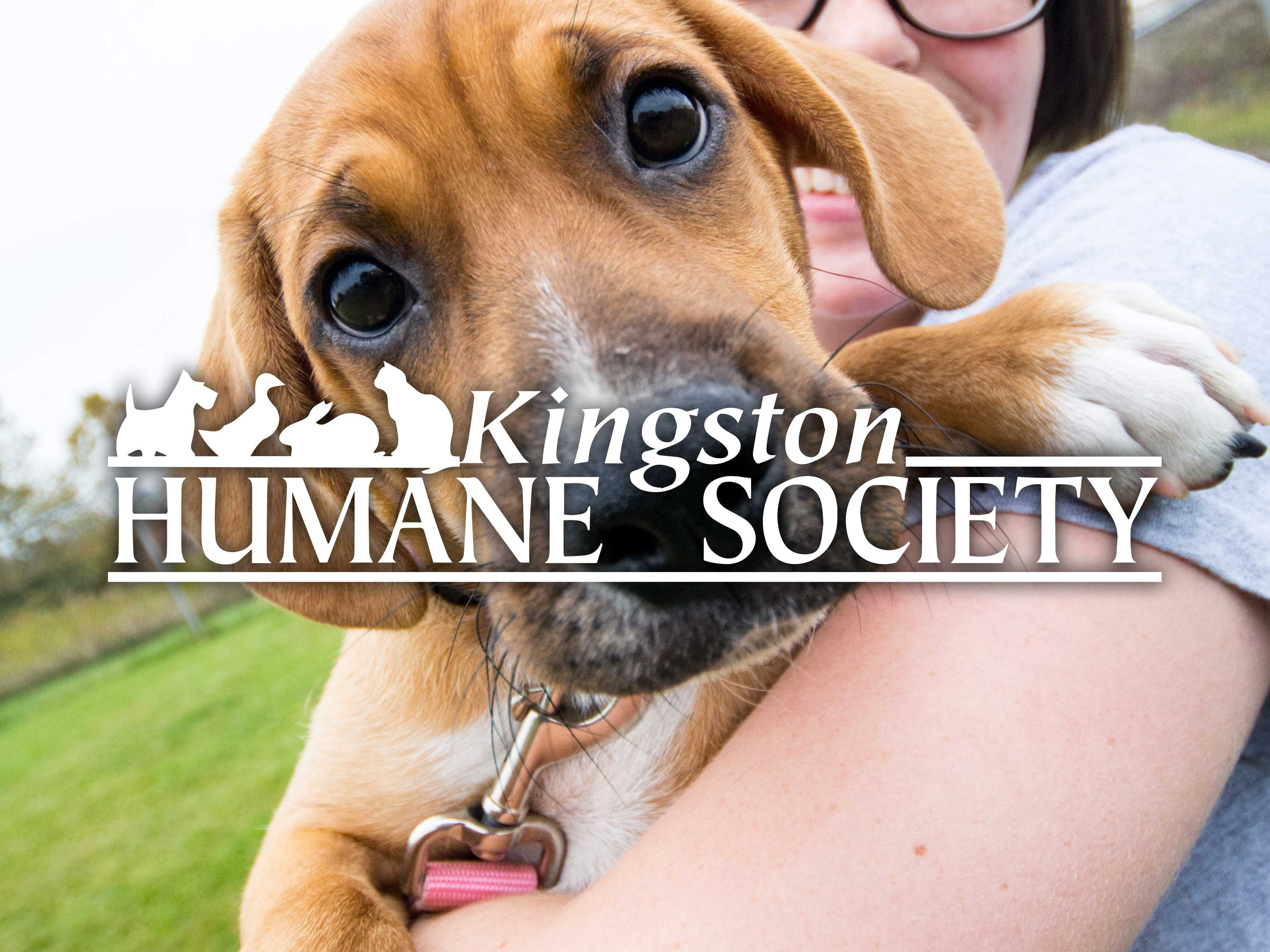 Amplify is there for Not-For-Profit Organizations like the Kingston Humane Society as well.